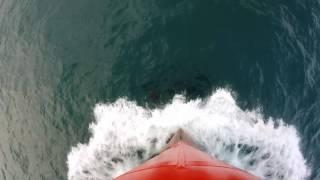 Dolphins. Black Sea.
