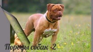 Породы собак -2 часть  Собаки фото