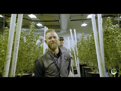 Cultivation Max - Testimonial - Powered by Three A Light