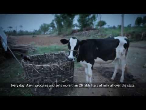 SAP - Aavin Corporate Video