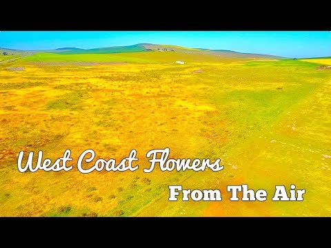 Cape Town // West Coast Flowers // Drone Footage
