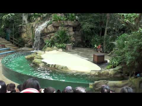 Rainforest Fight Back Performance @ Singapore Zoo [HD]