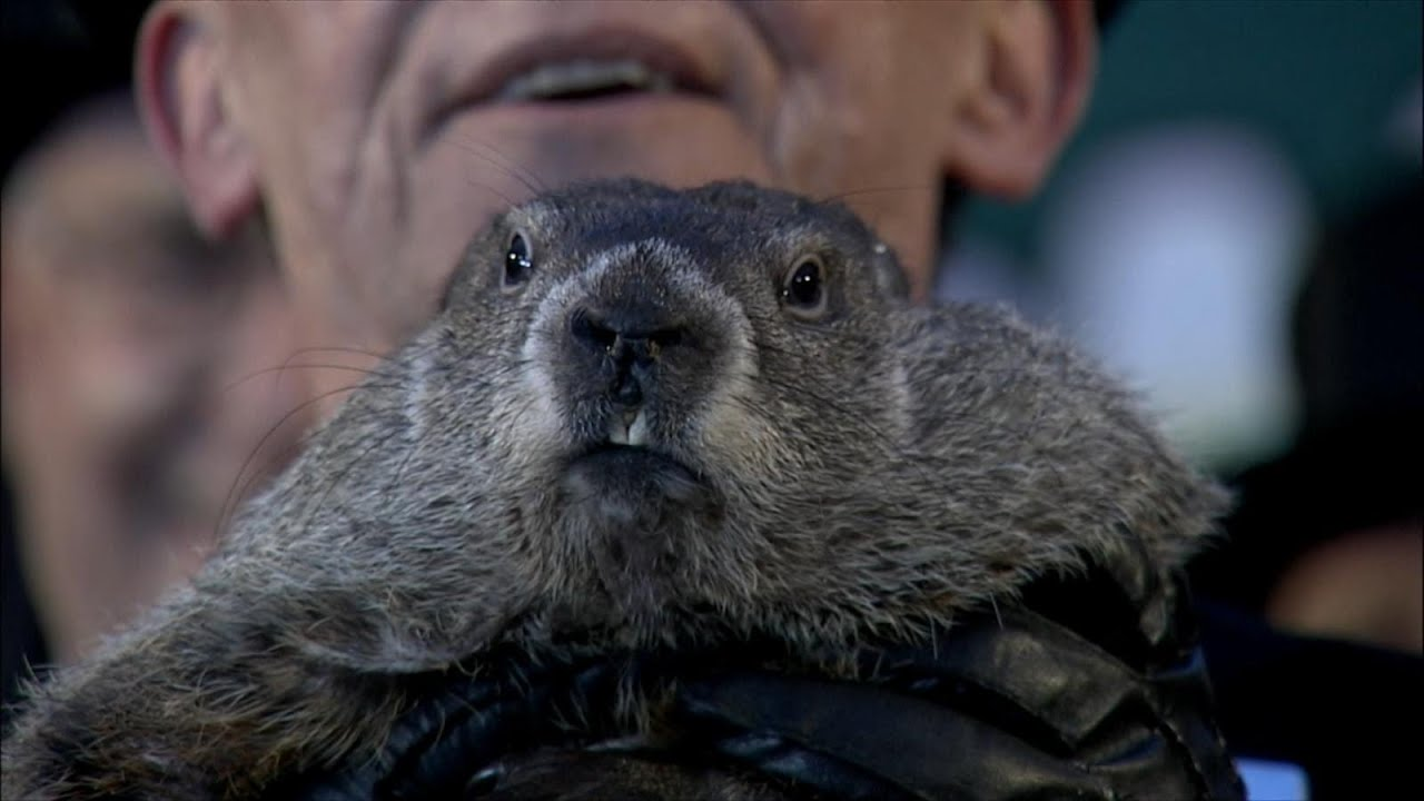 Uncategorized Groundhog Day Videos groundhogs day 2015 punxsutawney phil sees shadow 6 more weeks of winter youtube