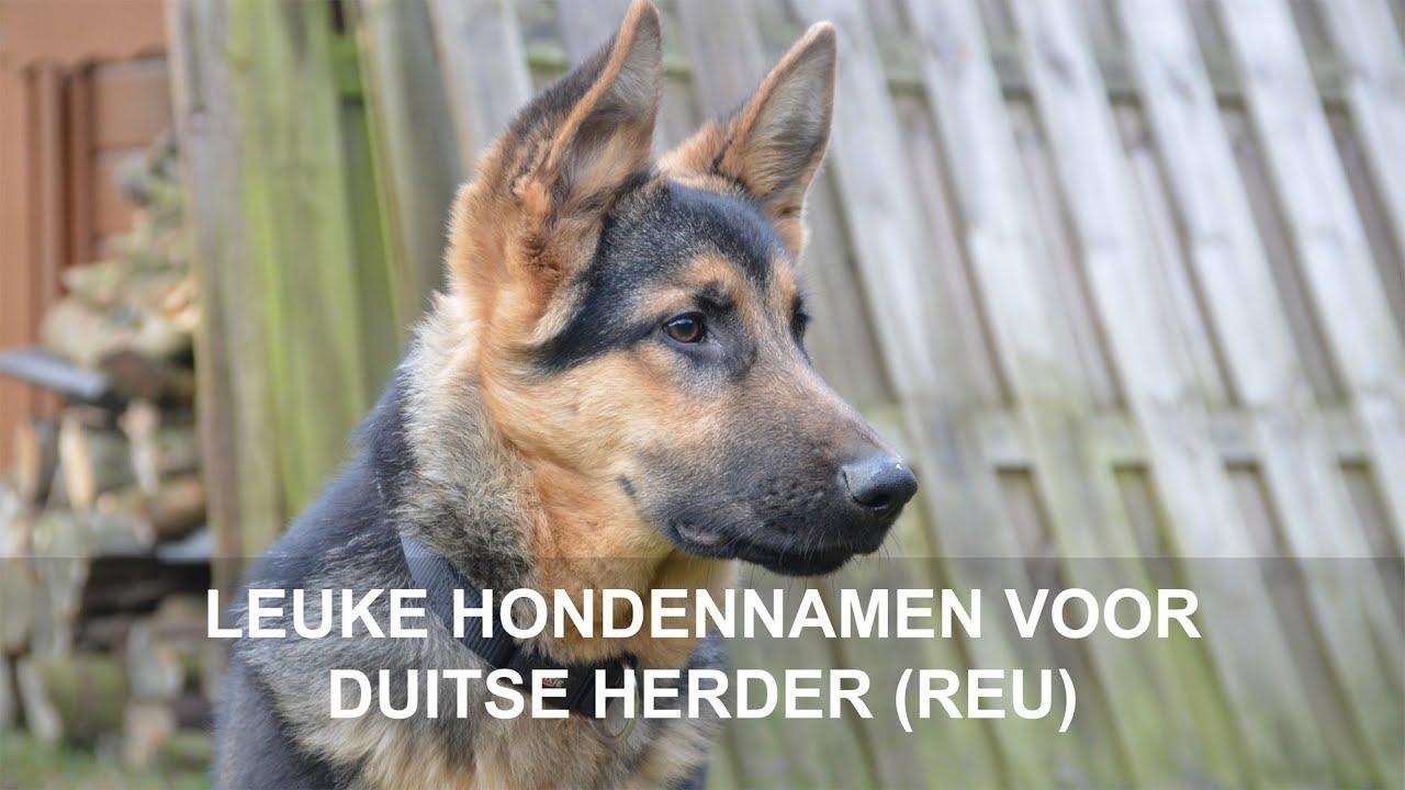 leuke hondennamen voor duitse herder (reu) - youtube
