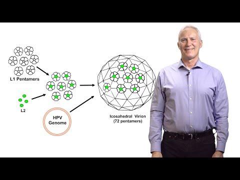 John Schiller (NCI at NIH) 1: Human Papillomavirus (HPV) Vaccines to Prevent Cancer