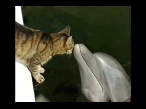 Image result for cat dolphin