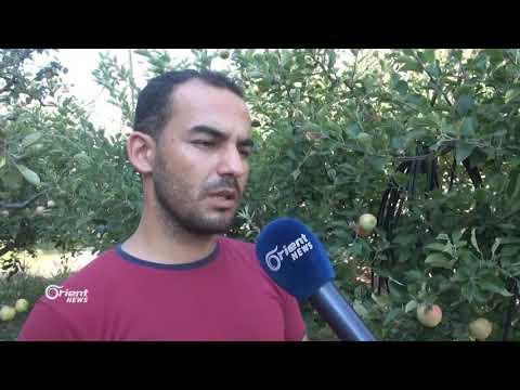 قصف مستمر لميليشيا أسد الطائفية وحركة نزوح للأهالي في قرى جسر الشغور