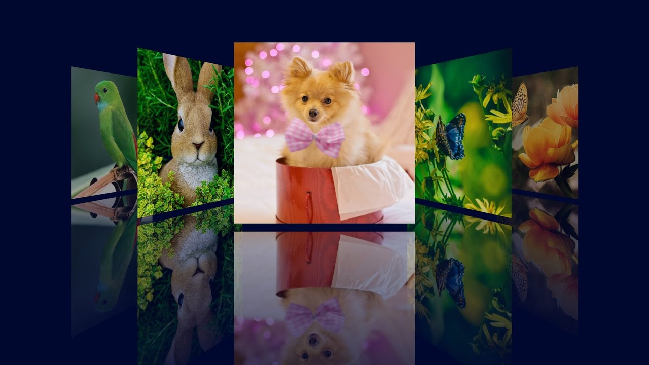 How To Make An Image Gallery With CSS Reflection | HTML, CSS & jQuery Image Gallery