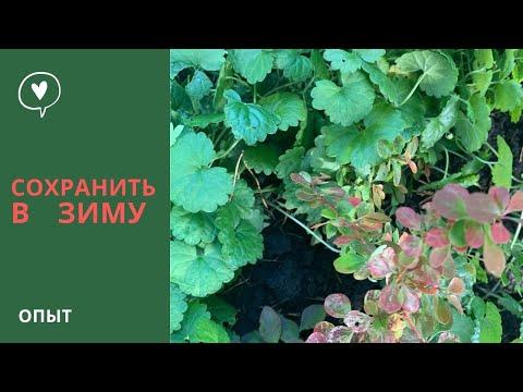КАК СОХРАНИТЬ ЗИМОЙ растения и цветы. Зимовка саженцев