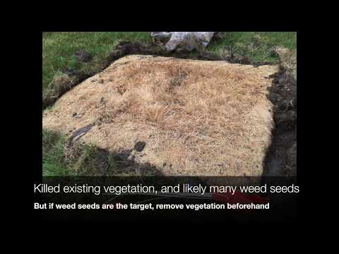 Soil Solarization For Weed Control