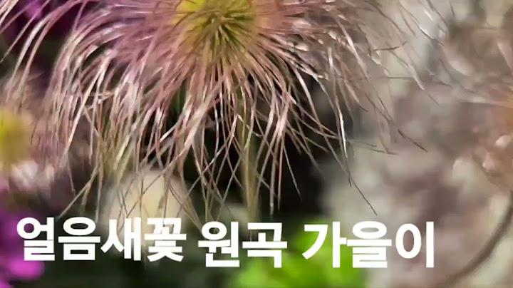 가수이상예  얼음새 꽃  가을이  커버곡
