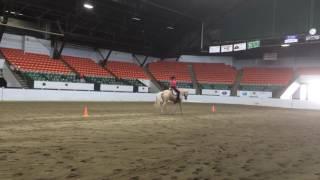 Video Novice Amateur Horsemanship Morgan O'Sullivan download MP3, 3GP, MP4, WEBM, AVI, FLV November 2017