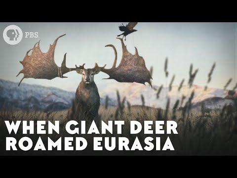 When Giant Deer Roamed Eurasia