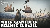 When Giant Deer Roamed Eurasia