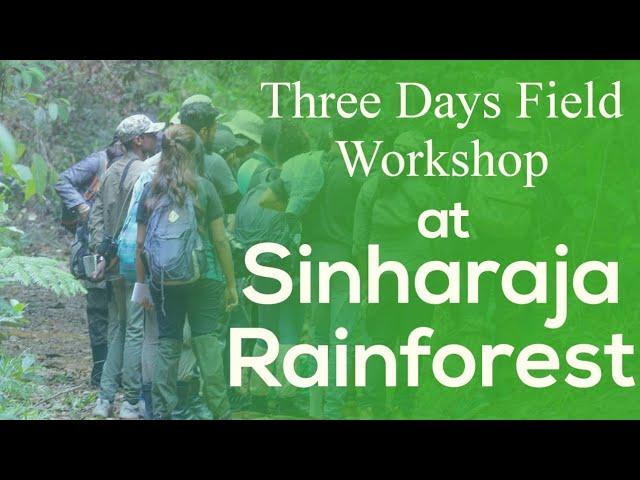 Field Workshop at Sinharaja Rainforest