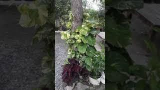 my garden tour