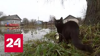 Смотреть видео На северо-западе России ждут вторую волну паводка - Россия 24 онлайн