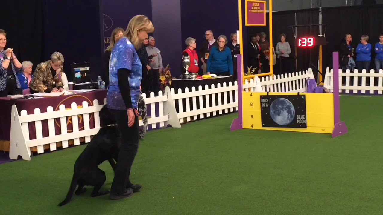 Watch Westminster Dog Show Free