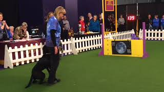 Westminster dog show 2018: N.J. dog wins obedience for the third time