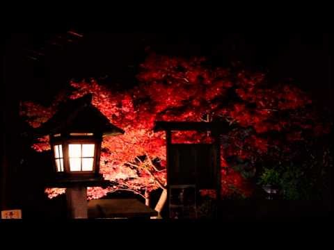 Autumn Night in the Shinsen-en, Kyoto 【HD】