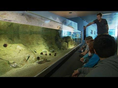 Viure al Pais en catalan à l'aquarium de Banyuls-sur-Mer