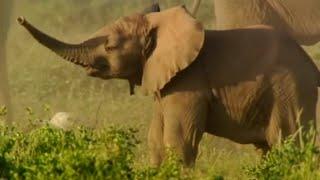 Fighting Elephants - Wildlife Specials: Elephant - Spy in the Herd - BBC
