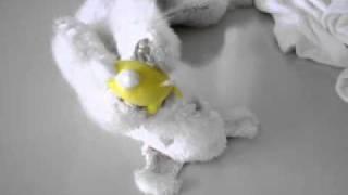 Bedlington Terrier ベドリントン テリア の ラッテです.