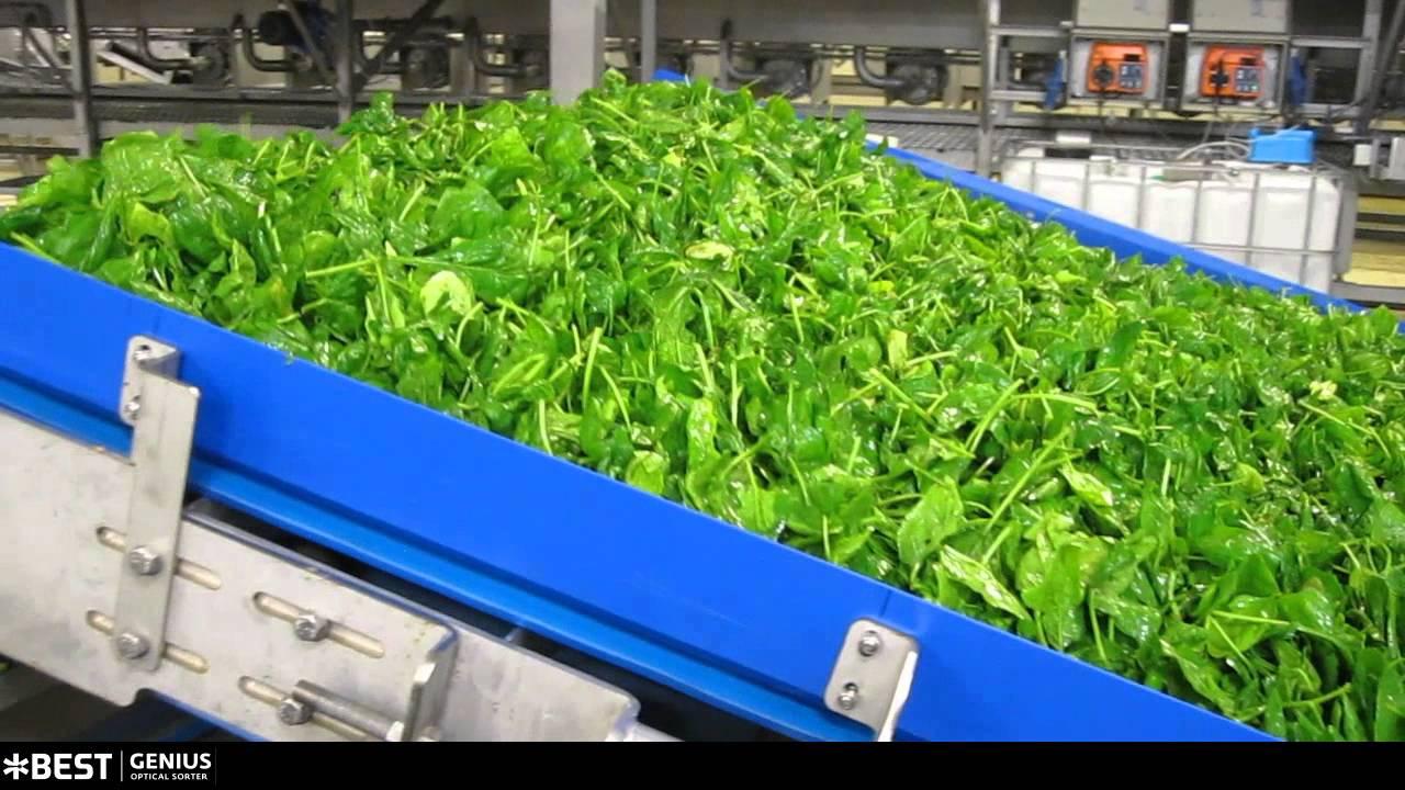 Spinach sorter Genius - TOMRA Sorting
