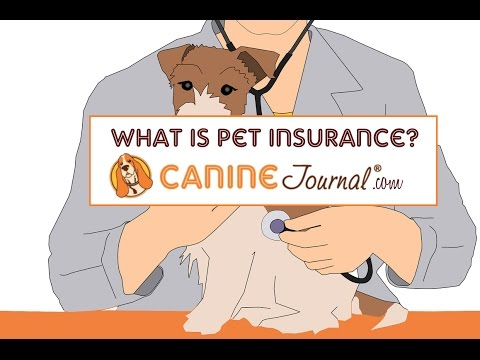 What is the Best Pet Insurance and Why Do I Need It?