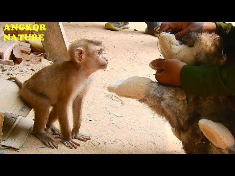 Thank Little Boy For Make Axel Happy And Not Living Alone | Angkor Nature