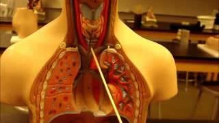 bio 141 organs systems part 1