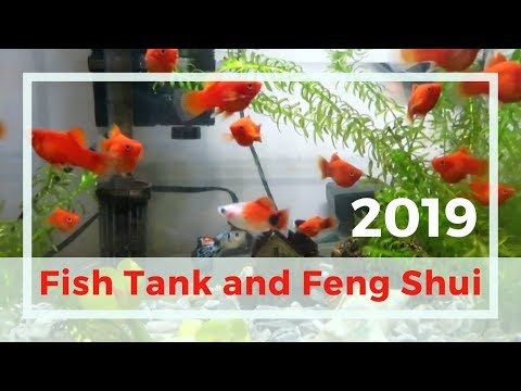 Best Place To Set Up A Feng Shui Fish Tank In 2019