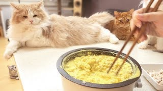 Homemade Cat Food : Chicken and Scrambled Egg