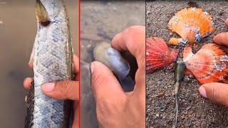Талантливый рыбак ловит морских глубоководных существ EP33
