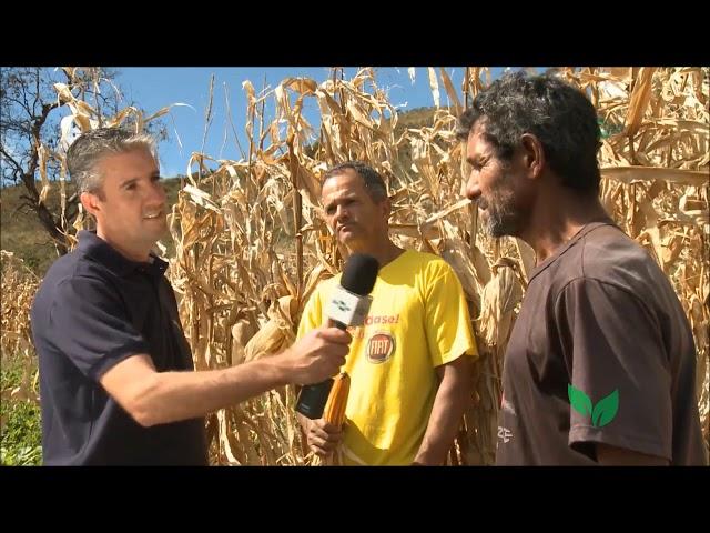 Milho BRS Caimbé Orgânico: Depoimento Agricultores Serra do Rola Moça