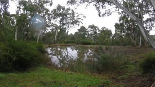 BB008 - Soundscape: Banksia Park thumbnail