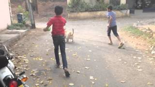 My Doggie playing outstanding football with kids