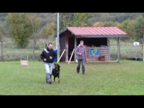 Club Canin d'Allenjoie - Obéissance - YouTube