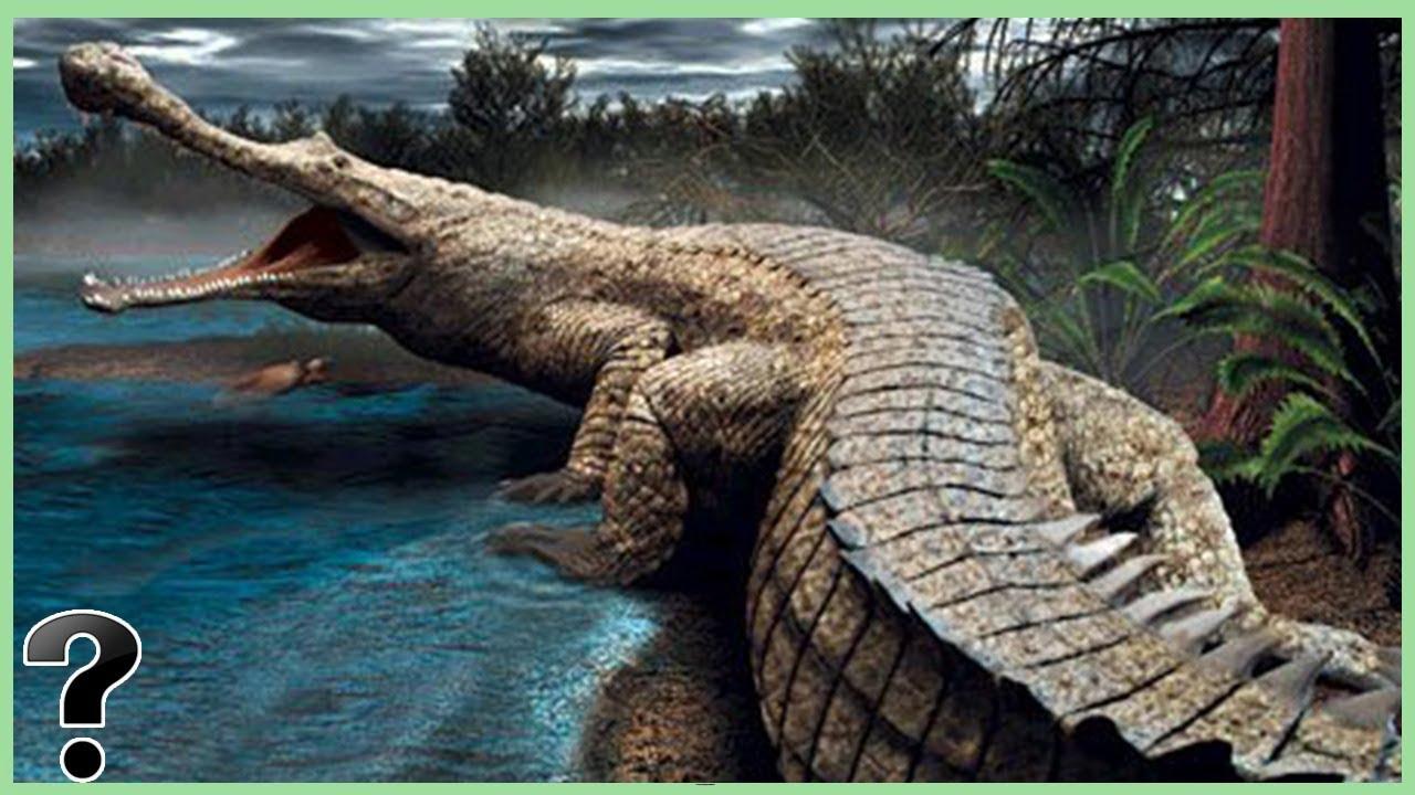 sarcosuchus - PageBD.Com