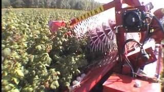 NATALKA - półrzędowy kombajn do zbioru malin jesiennych (raspberry harvester)