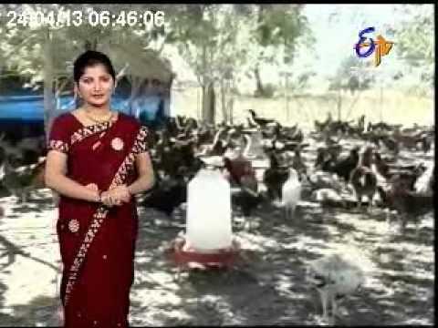 Annadata - अन्नदाता - 24th Apr 2013 - ETV MP Chhattisgarh