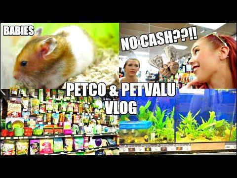 PETCO Hamsters & Fish | PET STORE Vlog | Getting New Fish Plants