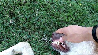 Sevilecek Köpek, Sevilemeyecek Köpek, Kararsız Köpek