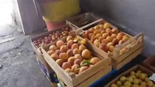 На рынке в Ереване/абрикосы , персики.....