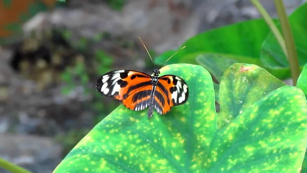 Butterfly Garden   Boston Science Museum