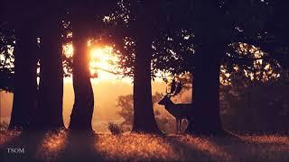 Ian Aisling - Light Through the Trees | Beautiful Contemporary Classical