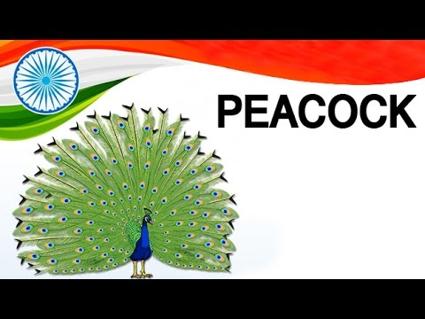 about peacock in hindi