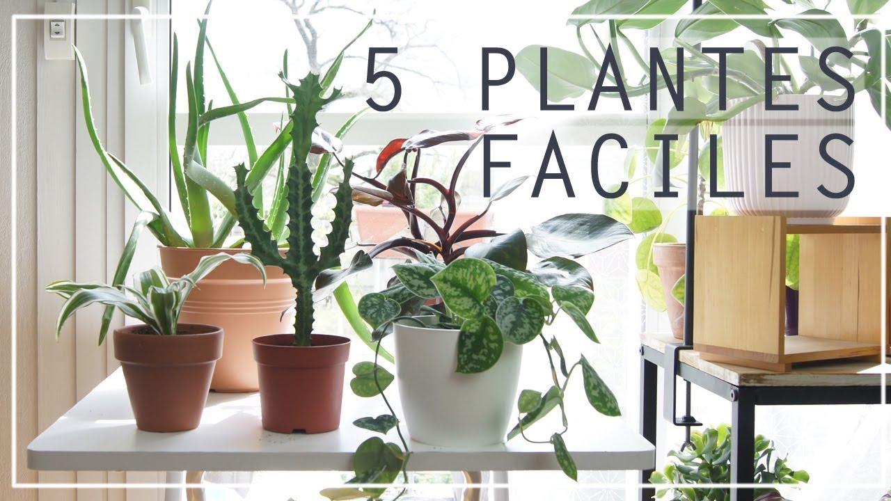 5 plantes d 39 int rieur faciles entretenir youtube. Black Bedroom Furniture Sets. Home Design Ideas