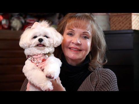 Trust Fund Dog: Bella Mia To Inherit A Fortune