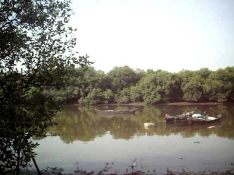 """""""MANGROVE FORESTS ECO-SYSTEM OF MUMBAI COASTLINE AT VASHI(New Mumbai) Sunday(19-4-2009)"""